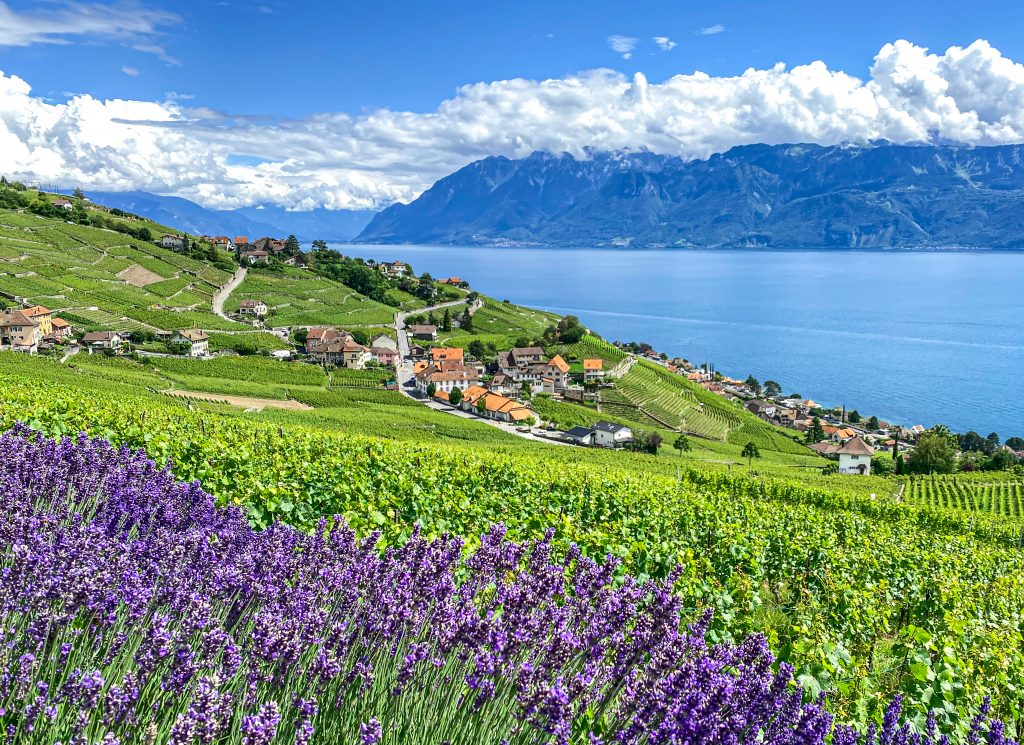 Lavaux UNESCO Lake Geneva Switzerland