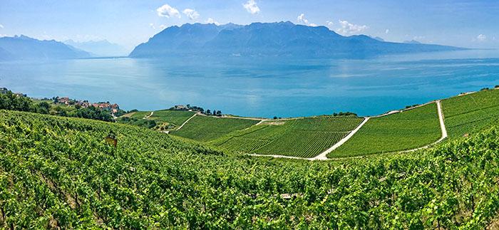 The Lavaux Lake Geneva Switzerland